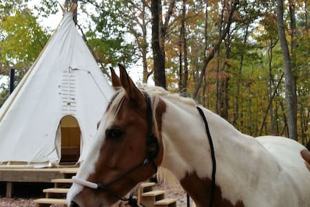 Upscale Camping in Authentic Indian Tipi - 林奇堡
