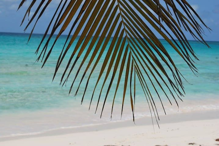 Coconut trees right on the beach