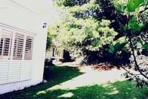 The beautiful and lush front garden