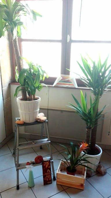 Espace vert pour apporter une touche feng shui et stimuler la circulation des énergies positives