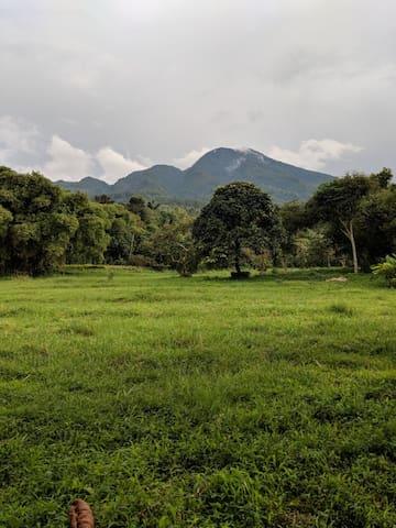 Kebunsu Bogor Villa Kayu Jati 2++BDR Jungle View