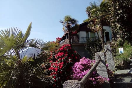 Nature Paradise in Gordola/Locarno (Palm view)