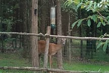 Local wildlife can be seen daily at the bird feeder. Bird food is provided and we encourage you to fill the feeder. Enjoy the show!!