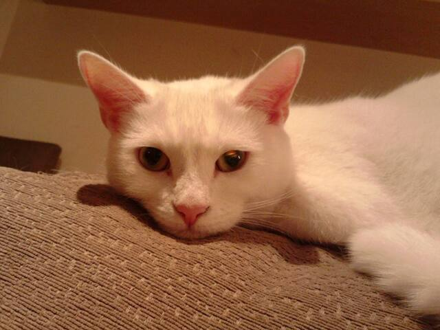 Frosties Cat (My Supermodel!)