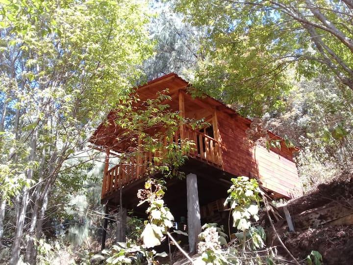 Cabaña en el Bosque de San José del Pacifico 2