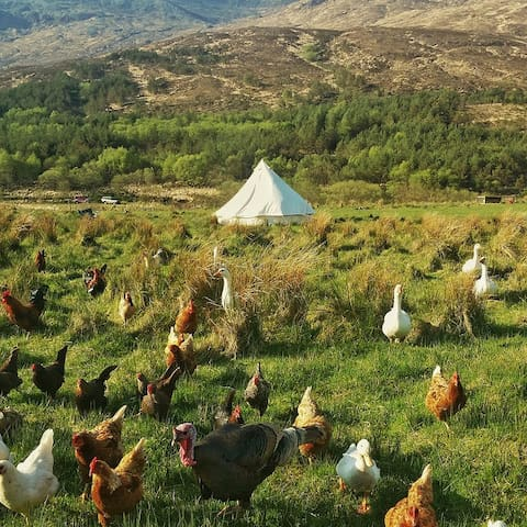 Bell tent on Croft 3, Isle of Rum - Kinloch
