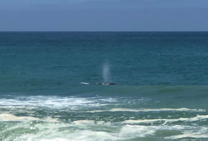 A very big dose of Vitamin Sea! Whale Migration up Sharp Park Shoreline. 2 minute walk to the shoreline.