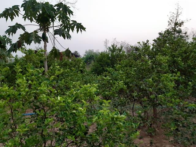 ริมฝั่งสาย หล่ายฮ่องโป่ง ฟาร์มสเตย์ Rimfungsai
