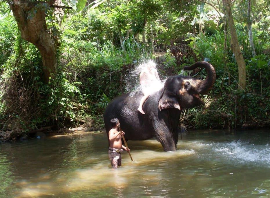 Elephant shower.