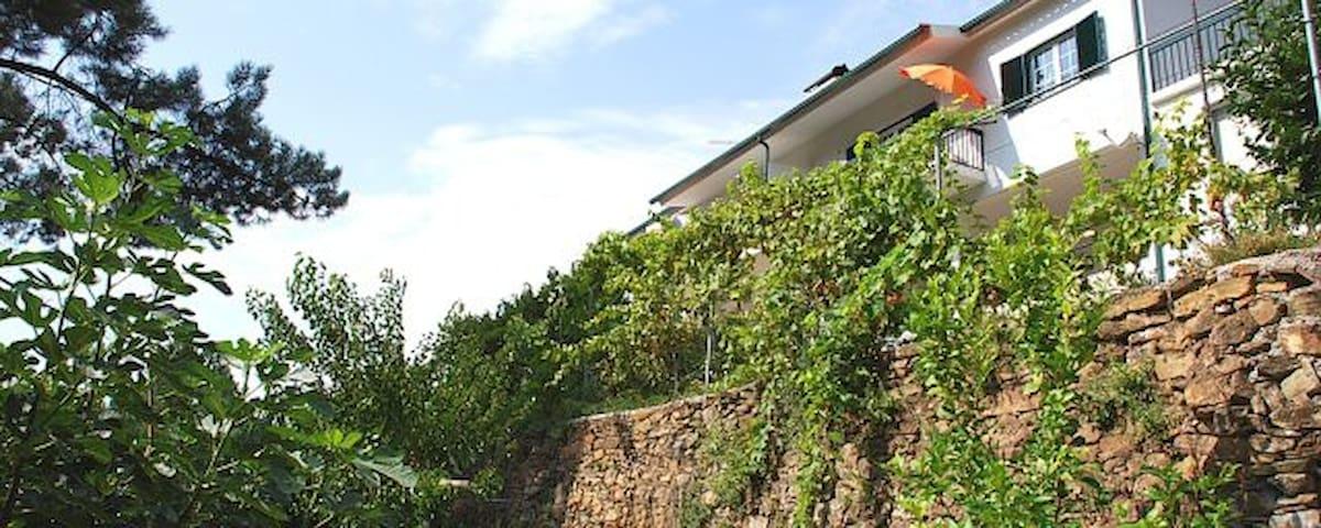 Casa de Paraíso de Sazes - Sazes da Beira - House