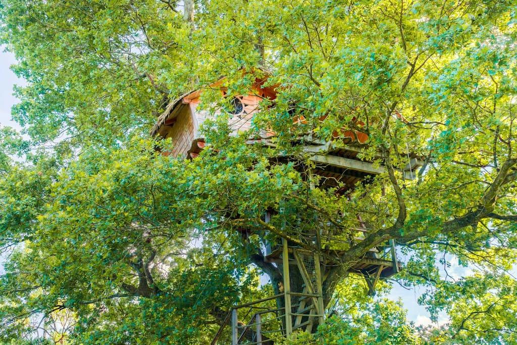 cabane infinie pour 2 personnes cabanes dans les arbres louer chassey l s montbozon. Black Bedroom Furniture Sets. Home Design Ideas