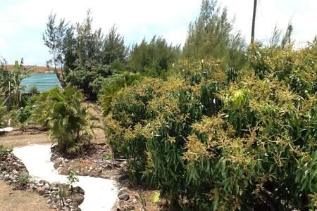 Domaine Des Bougainvillea