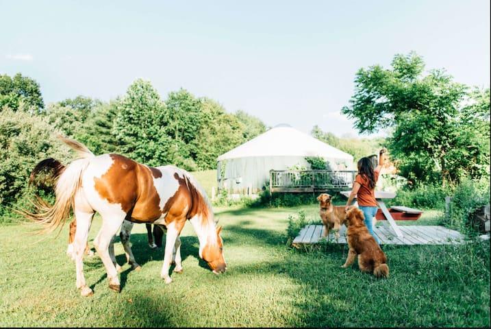 Cozy, Private Yurt on 27 acre Horse Farm w Hot Tub