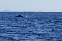 Whale watching from the coast