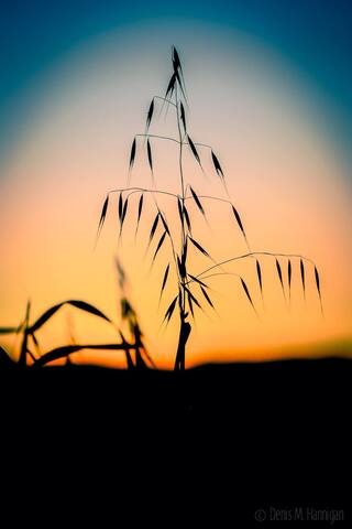 Sunset   Photo by Denis Hannigan
