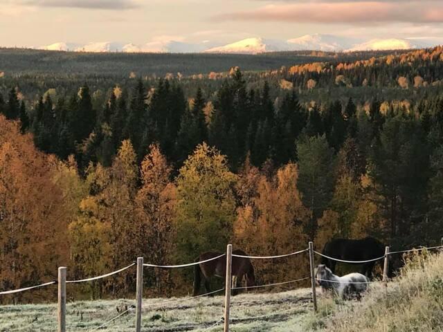 Healing Horses W Ranch