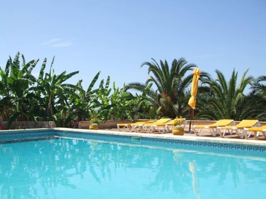 Palmen und Bananenstauden