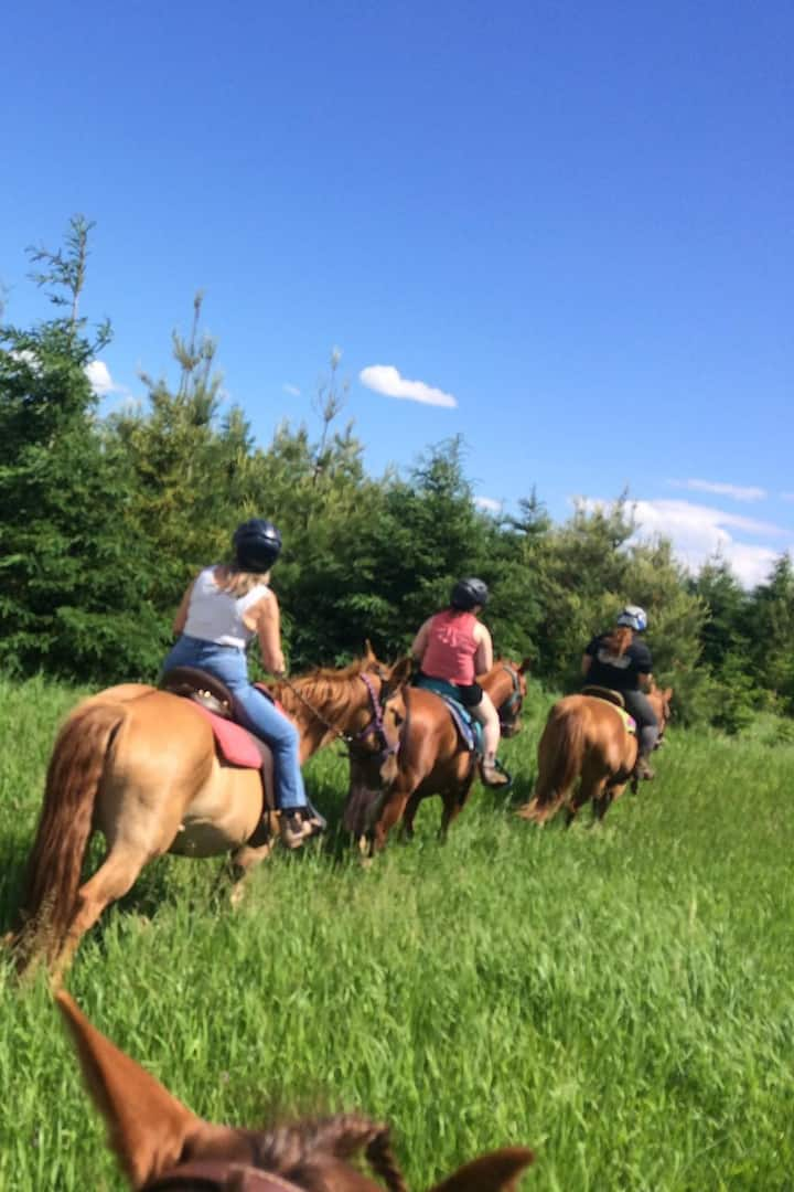 Horseback riding on the trails