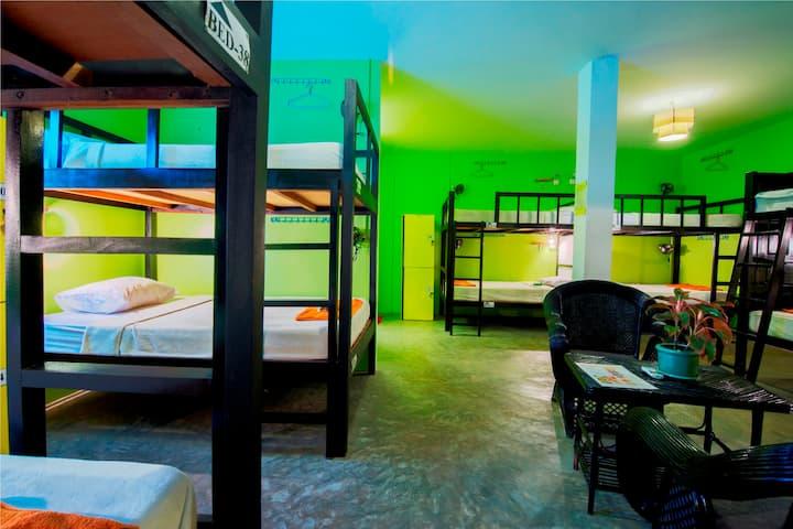 Dorm Bed Room/in city @Warm Bed Hostel