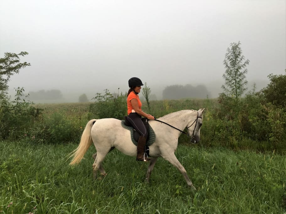 Our horses are part of our family