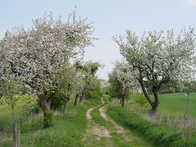 """Haus Lichtenhain - Ferienwohnung """"Teichblick"""" - Boitzenburger Land"""