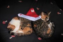 De poesjes met hun kerstmuts op!