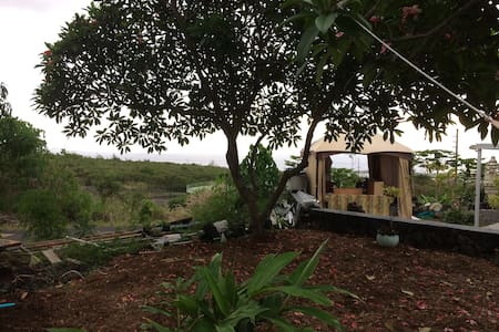 Sunrise over Mango Tree on Kona Hill