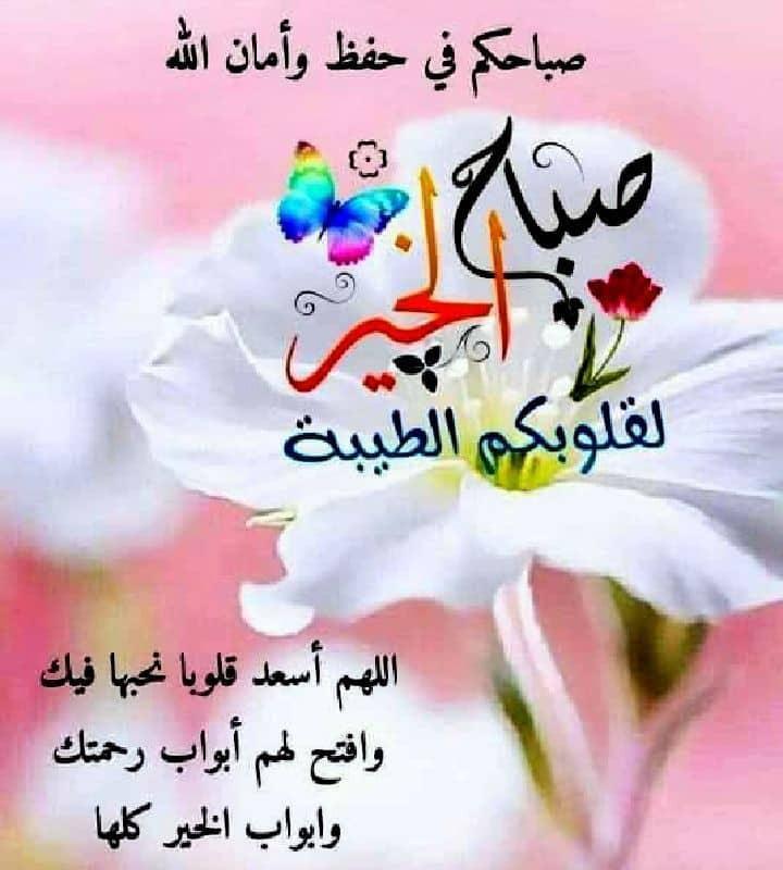 Shams sakara