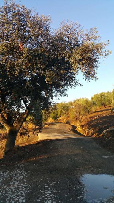 chemin d'accès au cortijo
