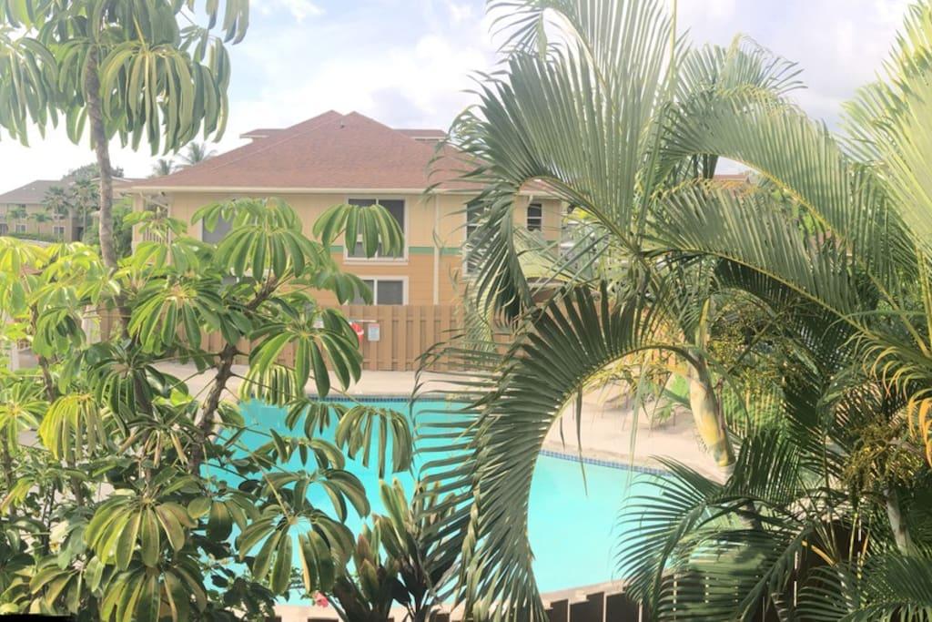 View from Lanai.
