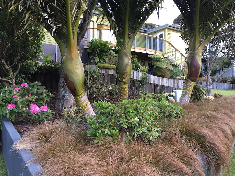 View of Green House from The street, seen through our 17 year old Nikau palms.
