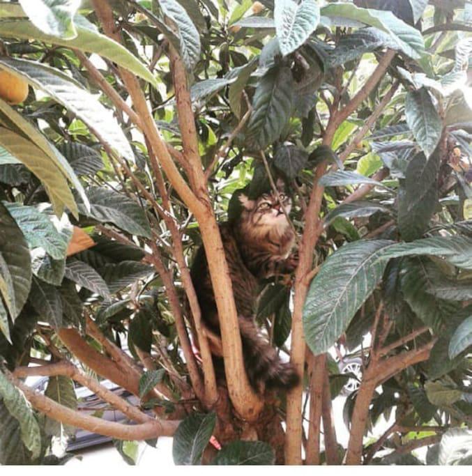 Bu bizim müstakil evin ağacı. Daldaki kedimiz hayvanları seviyoruz ☺️☺️☺️️☘️☘️ This is our trees love and our cays.