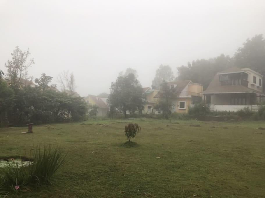 Common Lawn