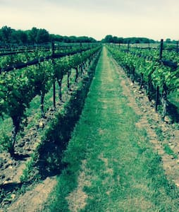 Villas in the vineyard. - New Paltz