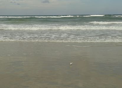 Daytona Seabreeze Resort - Andre