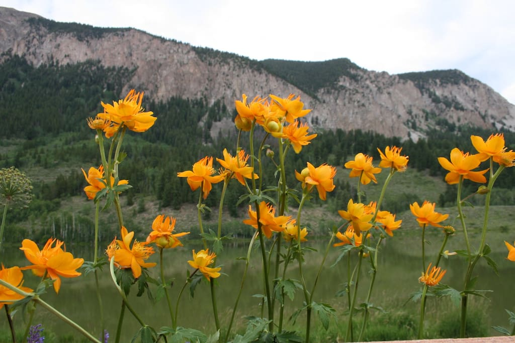 The Wildflower Capital of Colorado in July!