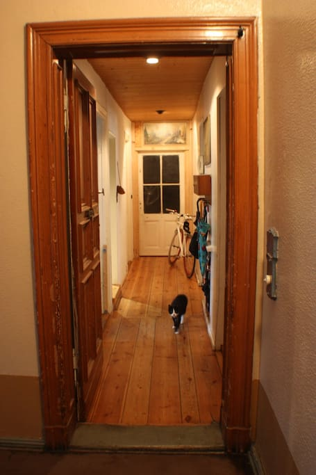 As you enter you're greeted by a noisy old cat.