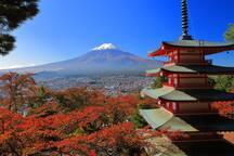葭Tatoo OK! HotSpring, Colourful Leaves PagodaOnsen