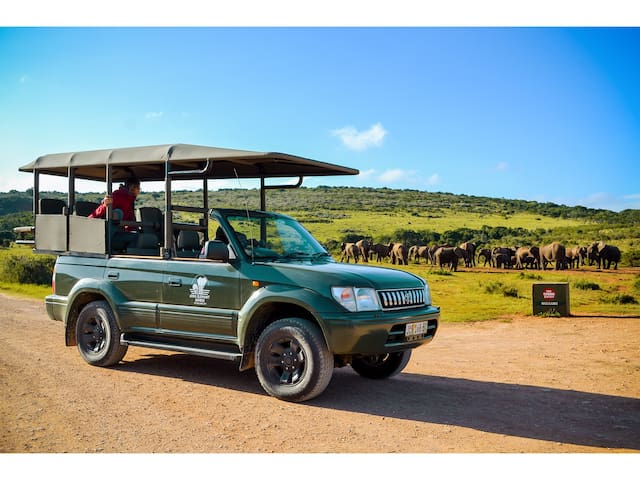 Half or full day Safari tours into Addo Elephant National Park can be arranged for you in our Open Safari Vehicle