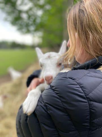 Trailer on organic farm