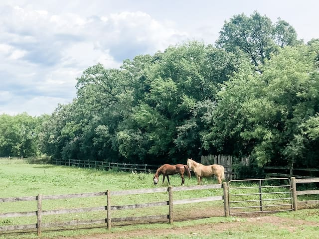 Unicorn Farm-- Pets Welcome!