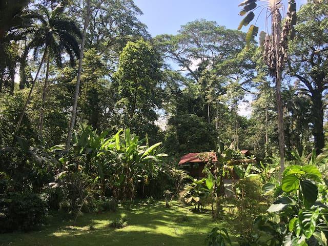 Casa Heliconia, junglehouse.