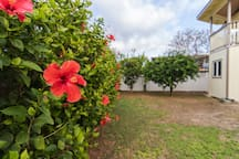 Hibiscus and fruit trees are abundant and open season for our guests.
