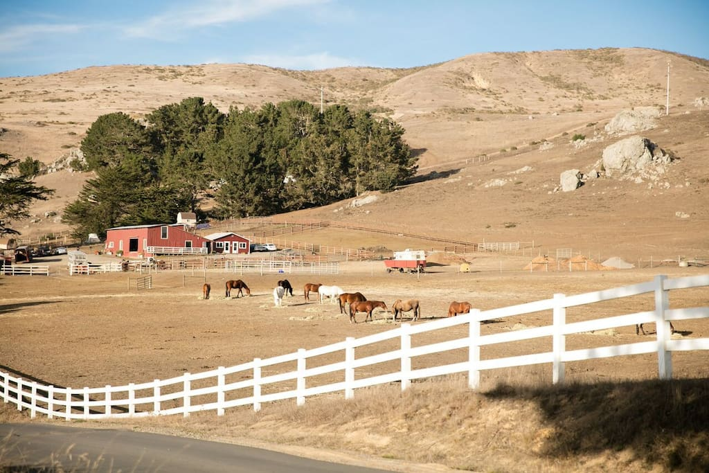 Chanslor Ranch and stables