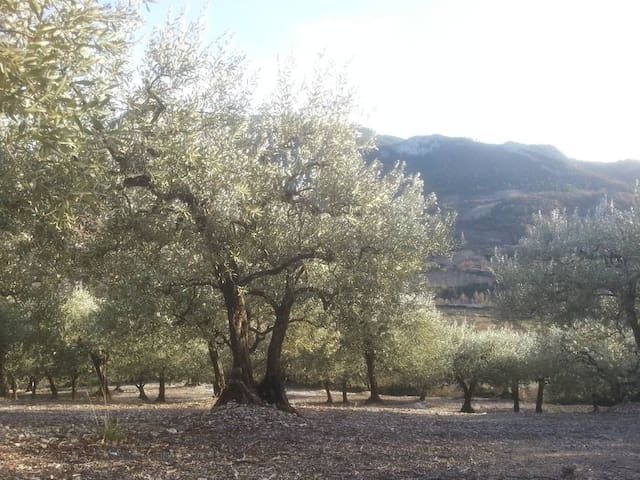 Nyons est le pays de l'olivier, de la lavande et de l'abricot.