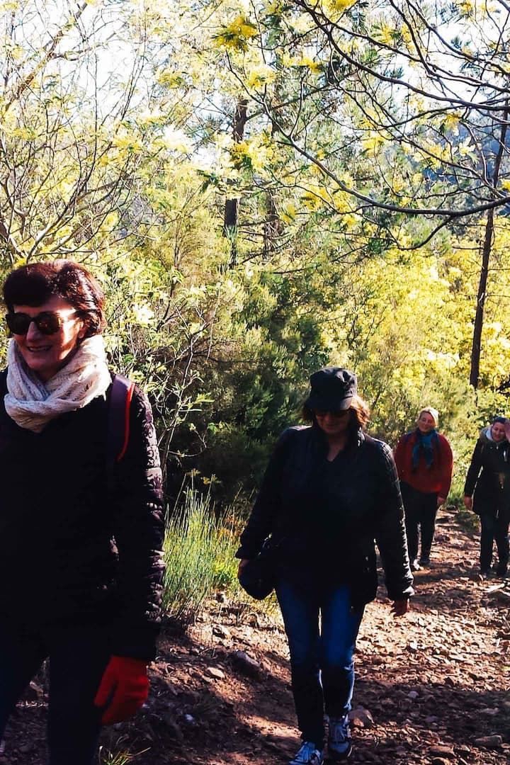Randonnée dans les forêts de mimosa