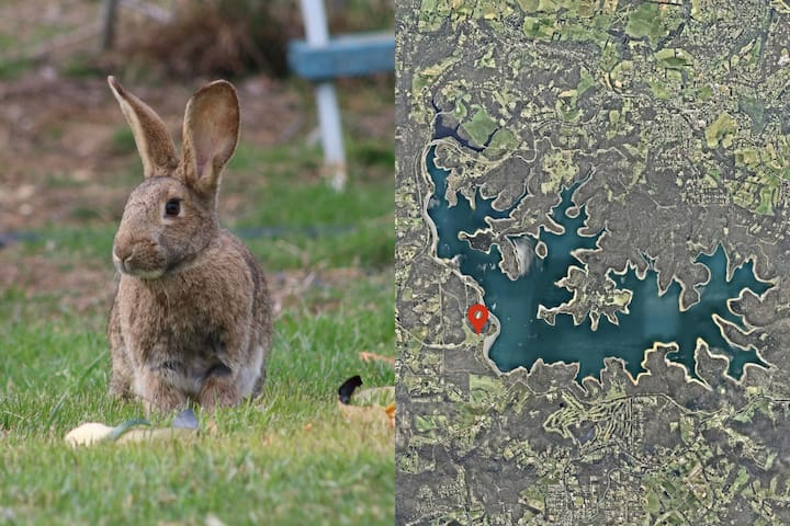 30 minutes by car: The enormous Cardinia Reservoir Park hosts many native Australian Wildlife running free in open air. You might see these wild rabbits if you're fast!