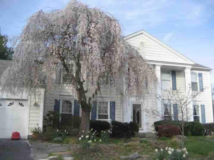 Lovely, peaceful, private home! LONG - SHORT TERM.