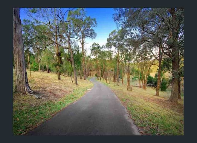 Bushland driveway to Wirrabara House - look out for kangaroos!