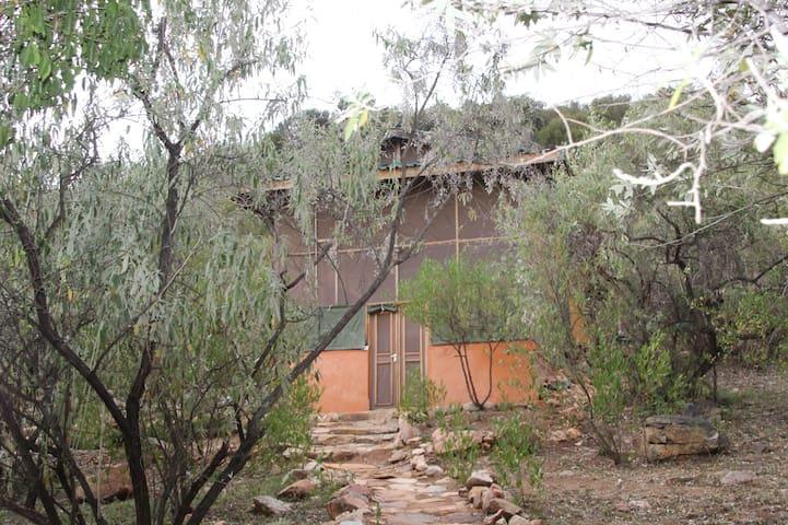 Mama Safi Guesthouse- Jua house